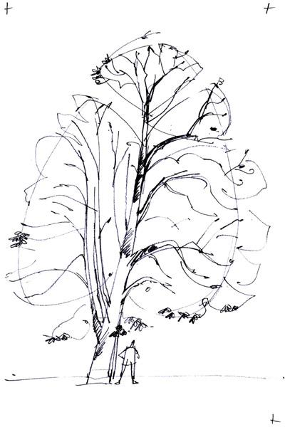 conseils pour dessiner un arbre