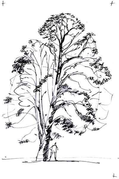 Conseils pour dessiner un arbre activit s ludiques - Arbre dessiner ...