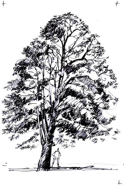Conseils pour dessiner un arbre activit s ludiques - Dessiner un arbre ...