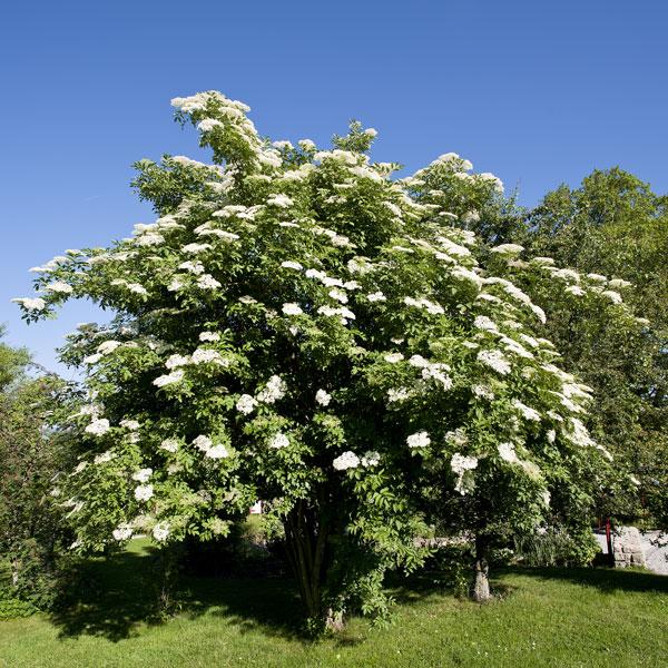 D coration arbre pour petit jardin ville caen 3822 arbre caen - Arbre pour petit jardin ville colombes ...