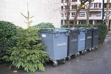 Sapins recyclage