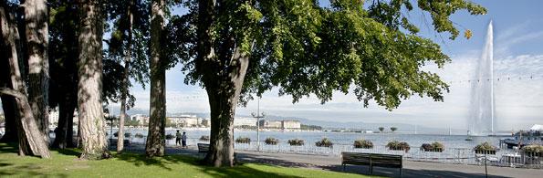 Les arbres gen ve environnement urbain et espaces for Jardin anglais geneve programme